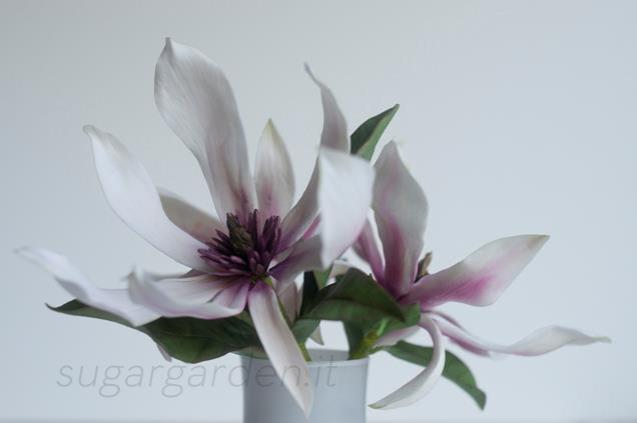 Magnolias_2