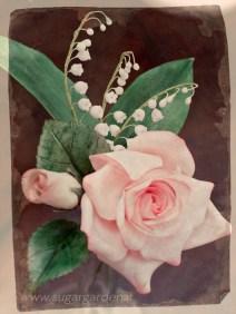 Rosa e Mughetto