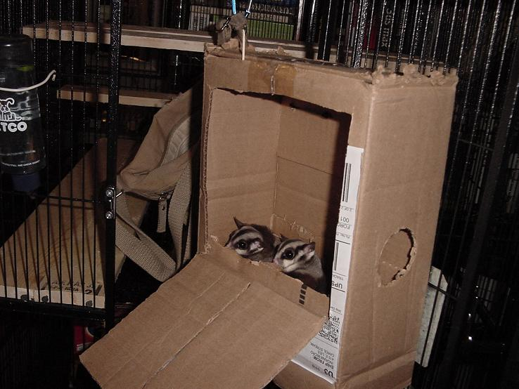 SugarGlidercom Journal  Testing nest box design for sugar gliders