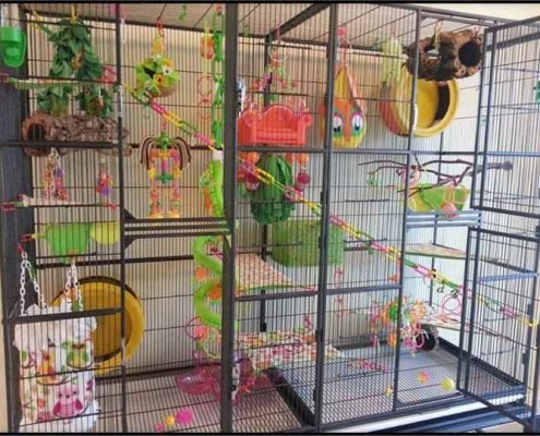 living room gliders turquoise and brown curtains sugar glider info – information without the ...