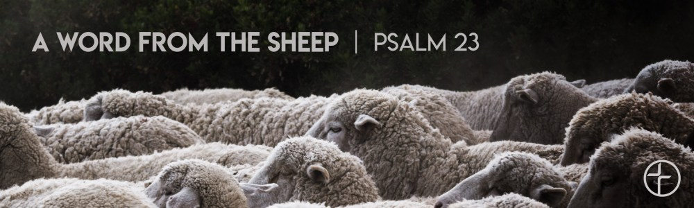 A Word From the Sheep