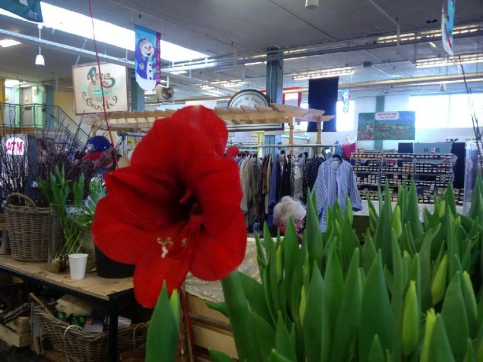 IMG_20150221_114537 the tulip guy