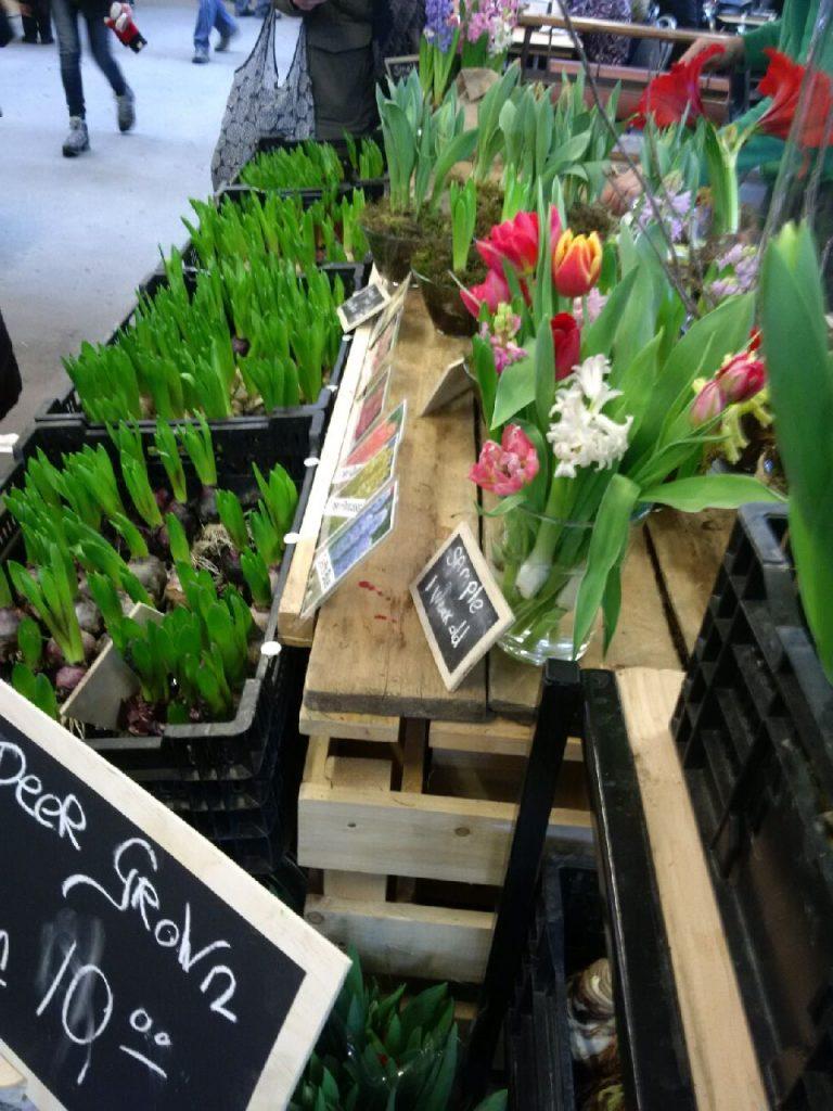 IMG_20150221_114544 the tulip guy