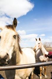 Triple Lyoness farm-horses