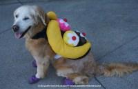 6 Halloween Pet Photography Tips - Golden Woofs
