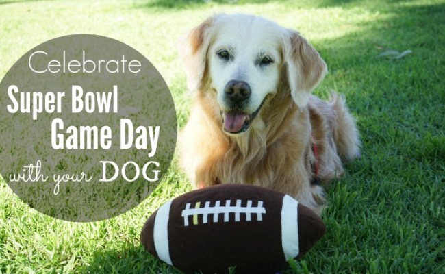5 Tips To Celebrate Super Bowl Game Day With Your Dog