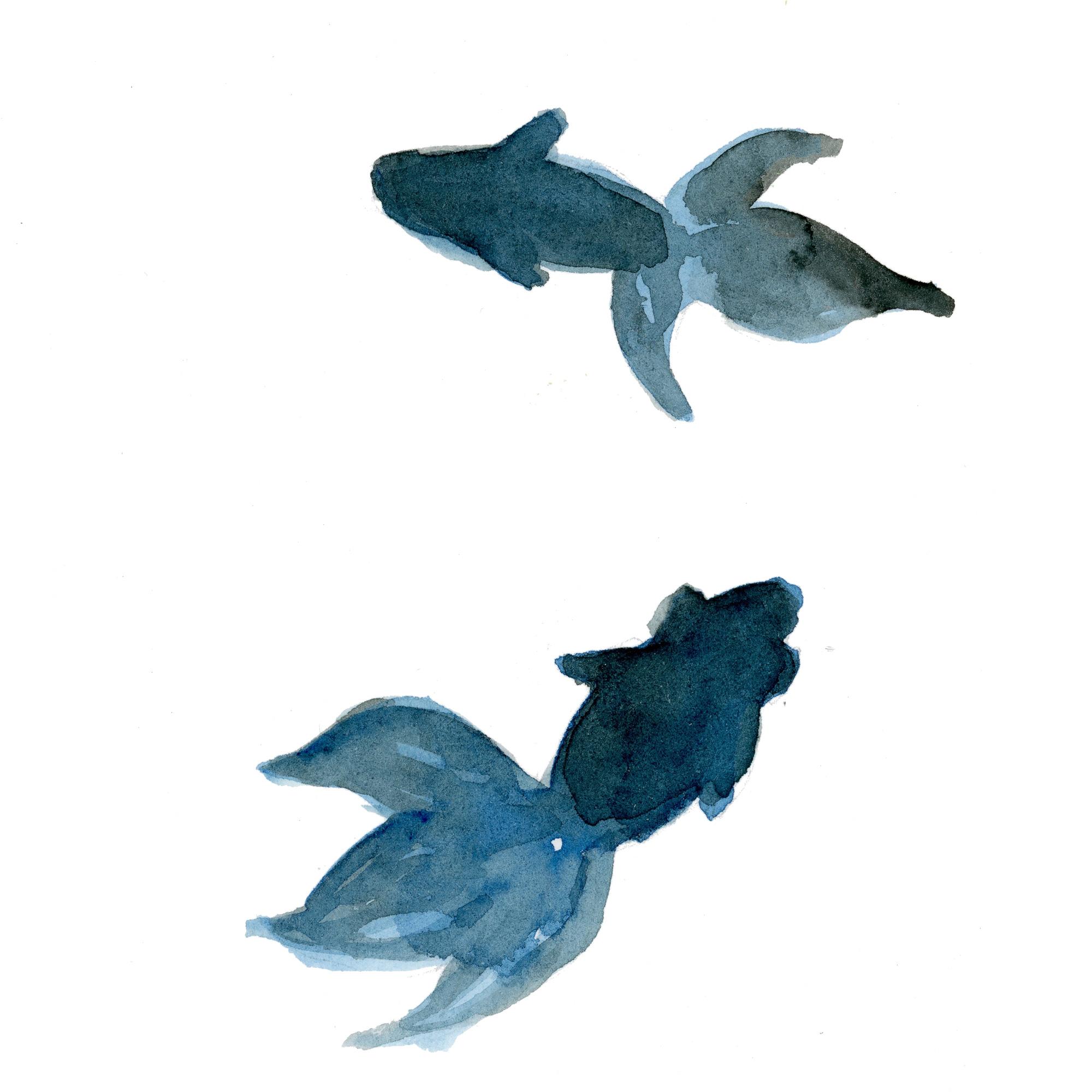 金魚|Sui-Sai|水彩畫イラストフリー素材集