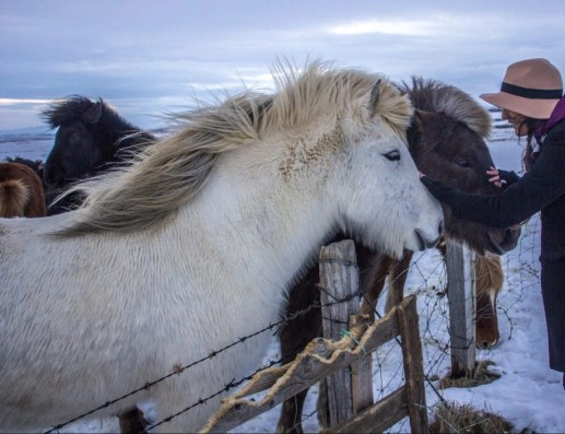 golden circle side of road icelandic horses solo female travel icelend winter roadtrip