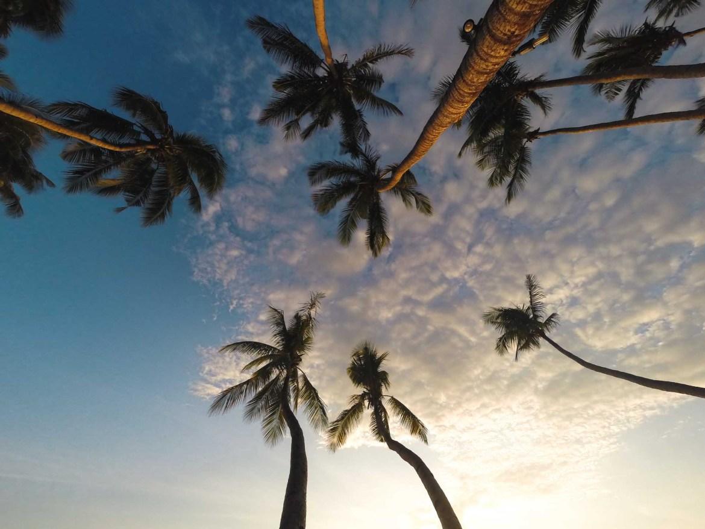 palmtrees in Palawan visit Philippines