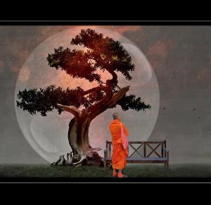 bonsai-monk-h-kopp-delaney