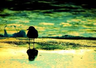 Birds - Ignorance emotional poem