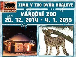 Vánoční zoo v ZOO Dvůr Králové (c) Jana Myslivečková