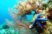Sulawesi Diving in Takabonerate