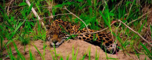 Manu Adventures Perú Jungle Ecological
