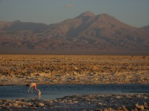 Flamingo watching in the Chaxa Lagoon in the Atacama Desert, Chile