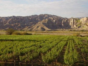 Landscapes and vineyards in the Calchaqui Valleys, Argentina