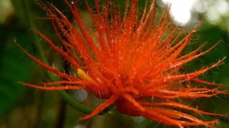 Biodiversity in the Amazon rainforest, Colombia