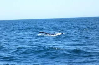 Whale-watching navigation in Peninsula Valdes, Patagonia Argentina