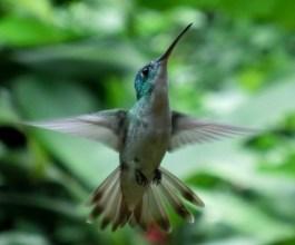 Wildlife in Mindo, Ecuador