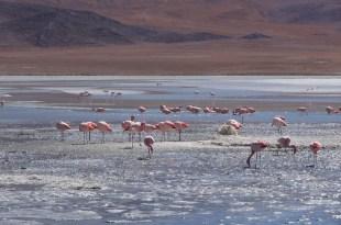 Pink flamingos in the Uyuni Salt Flat, Bolivia