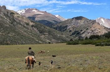Anastacio keeps a watchful eye on his herd