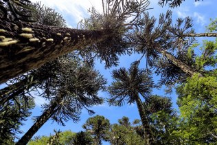 Looking up through the puzzling canopy above