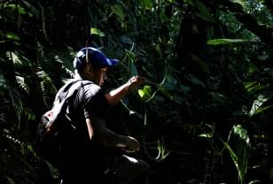 Clearing a path in the Parque Nacional Carrasco, Bolivia