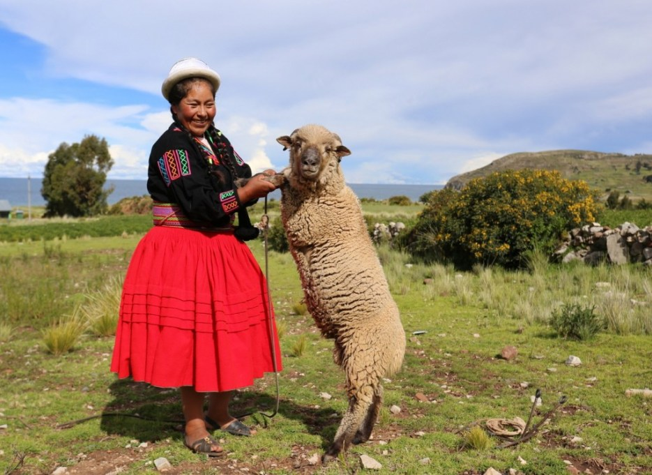 A member of the extended family, Lake Titicaca