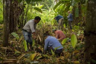 Hard at work on agroforestry projects in the Peruvian Amazon