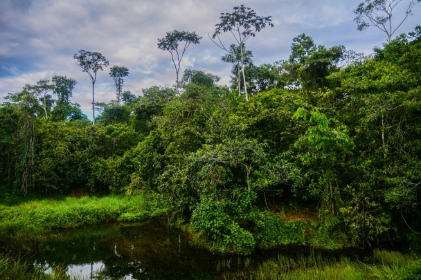 Wetland area on the Manu Learning Centre Reserve in Peru