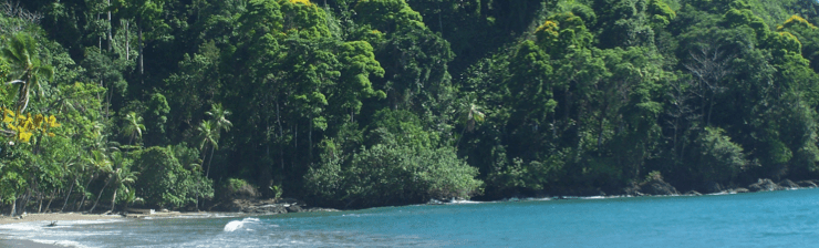 A tranquile beach in Corcovado National Park, Costa Rica