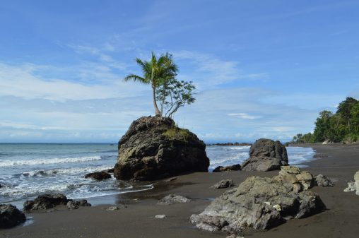 A lovely palm tree growing on a rock along the beach in Choco, Colombia