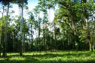 Forest trekking in Finca Sura, Costa Rica