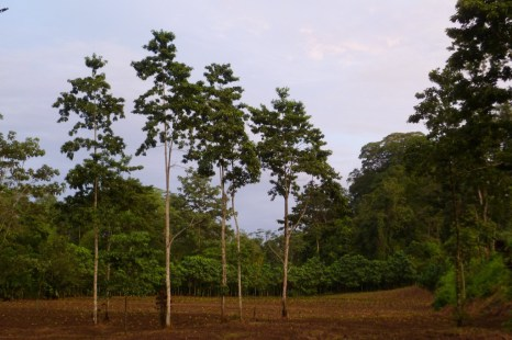Hiking through the organic farm and forest at Finca Sura in Costa Rica