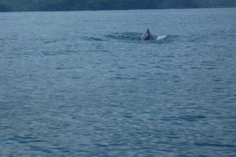 Beautiful day for whale watching on the Pacific Ocean in Costa Rica