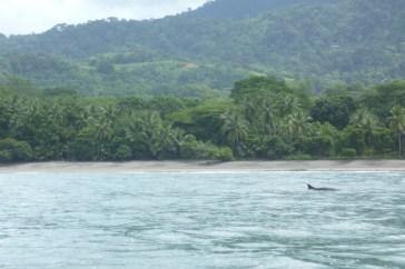Dolphin watching in Marino Ballena National Park, Costa Rica