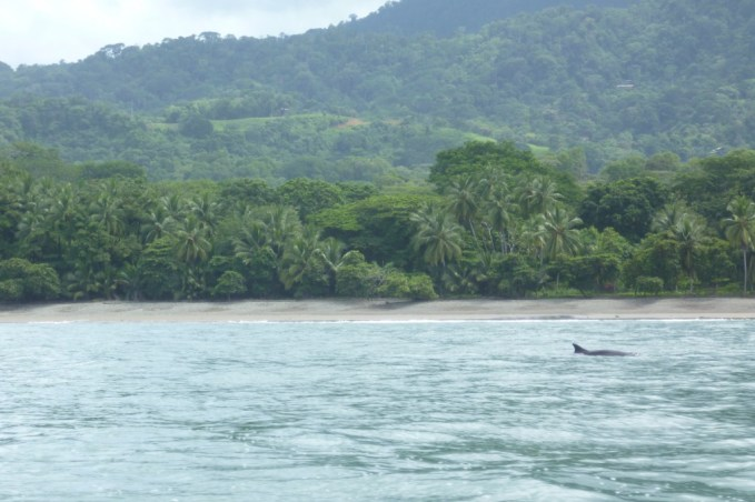 Dolphin watching in Marino Ballena National Park, Costa Rica