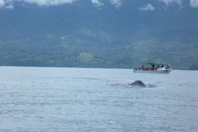Responsible whale watching in Marino Ballena National Park, Costa Rica