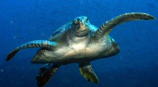 Underwater wildlife in the gulf in Chiriqui National Marine Park in Panama
