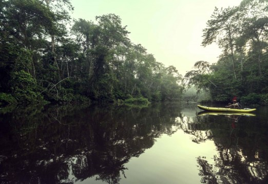 During a kayaking excursion in an untouched area of the Amazon rainforest in Ecuador