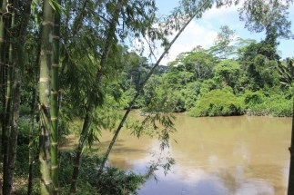 The lovely view from the accommodation at Mandari Panga Camp, overlooking the river in the Amazon rainforest, Ecuador