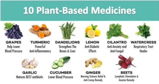 Plant-based-medicines