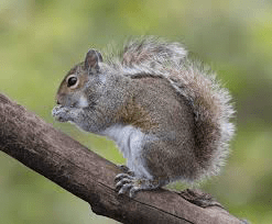 a guide to squirrels