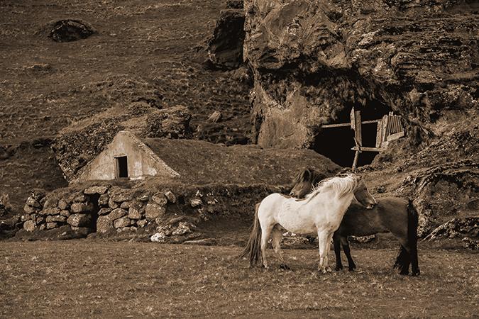 horses-sepia-stock-vintage