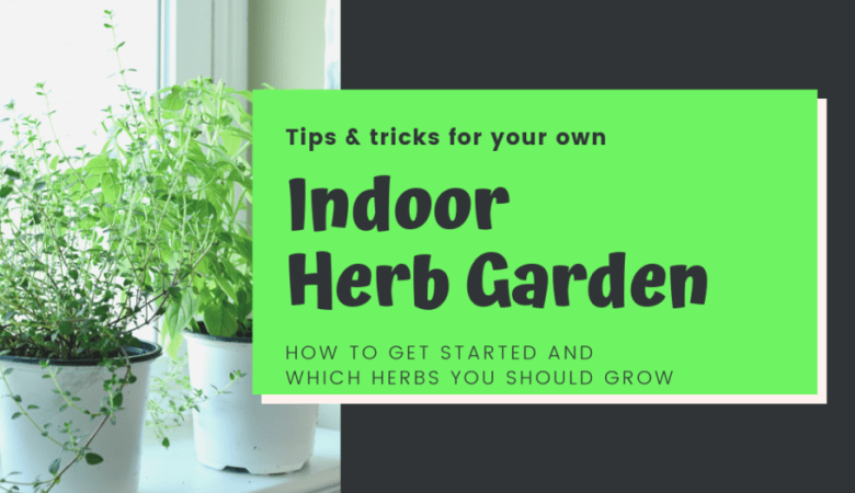 How to grow and maintain your indoor herb garden