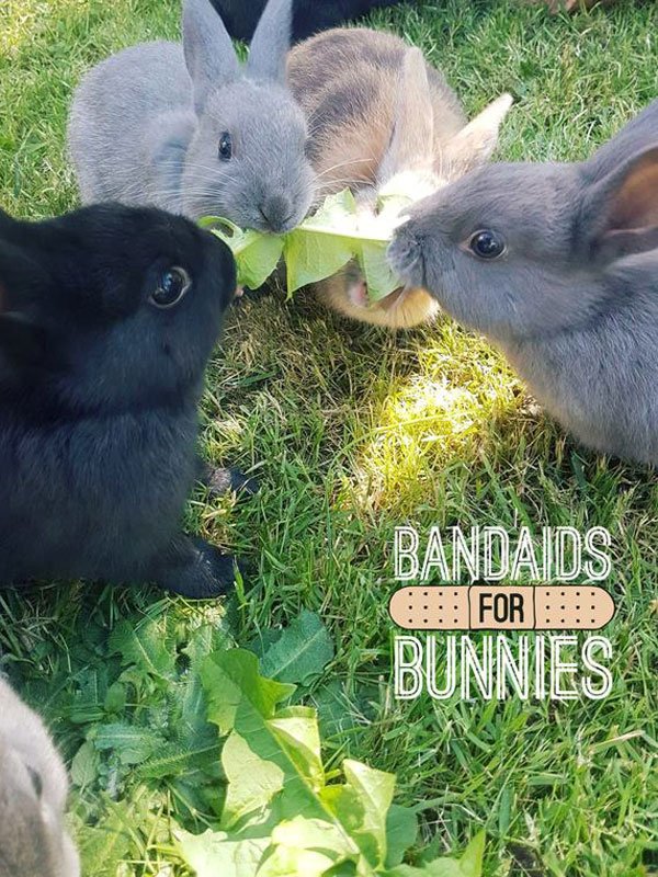 Afternoon out at Bandaids for Bunnies