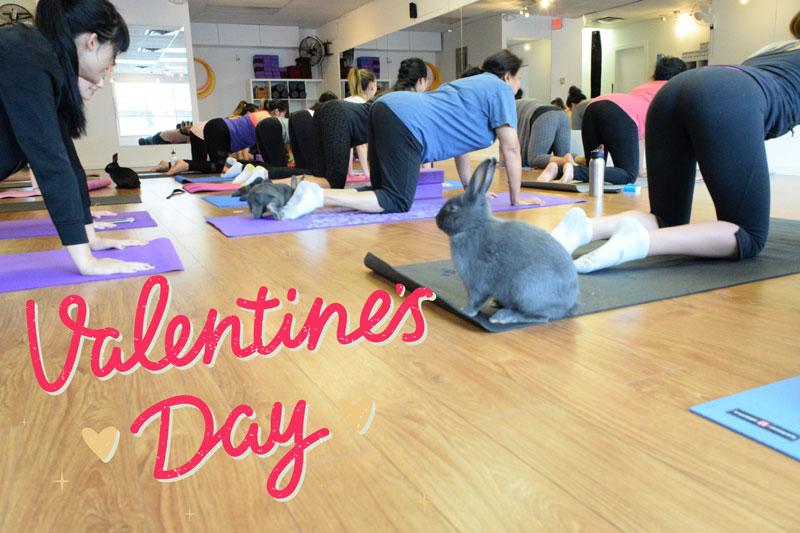 valentines bunny yoga