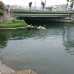 長浜港バス釣りポイント