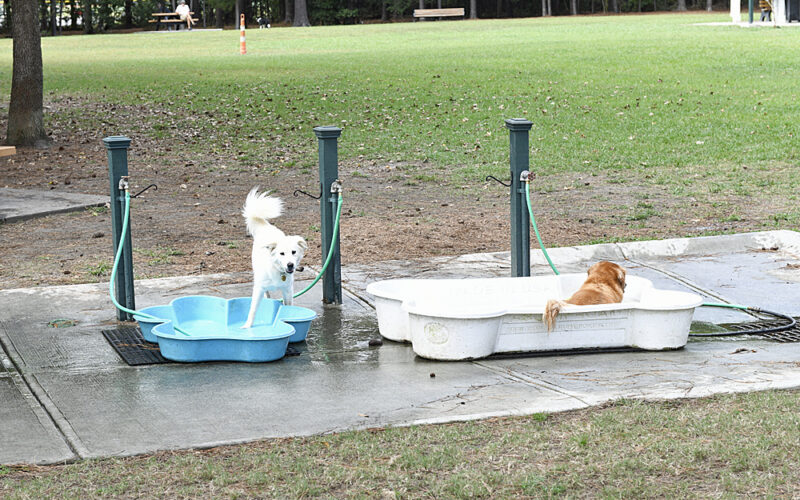 Dogs Cooling Off After a Run