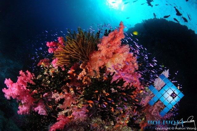 Ra Divers